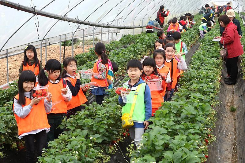 [Photo Essay ⑦] Organic Strawberry Fair이미지