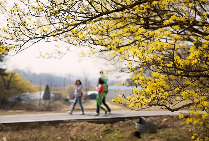 Trekking in Gyeonggi with a spring breeze ①이미지