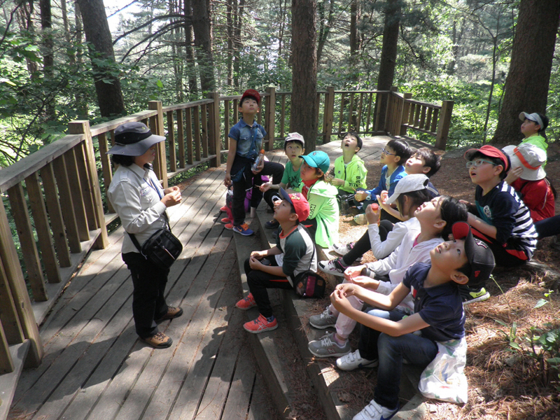 Get refreshed at Jat-Hyanggi Pureunsup Forest Recreation Park이미지